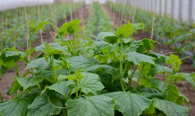 Start in die Gemüsesaison am Hof Domanja