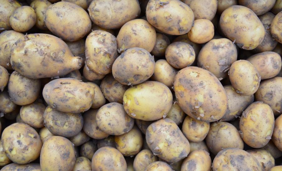 Kartoffeln_Solist
